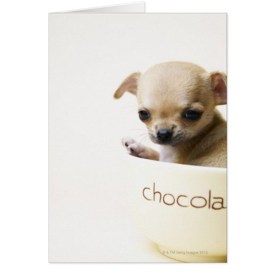 Chihuahua puppy in bowl (cropped) card