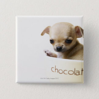 Chihuahua puppy in bowl (cropped) pinback button