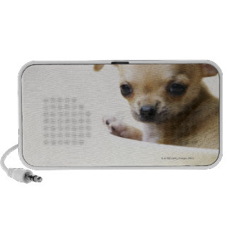 Chihuahua puppy in bowl (cropped) portable speaker