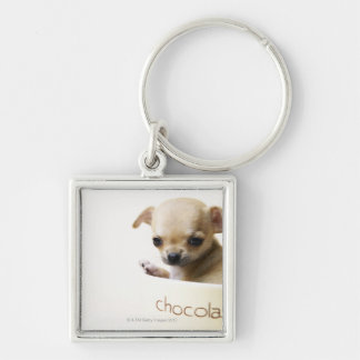 Chihuahua puppy in bowl (cropped) Silver-Colored square keychain