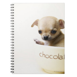 Chihuahua puppy in bowl (cropped) spiral note books