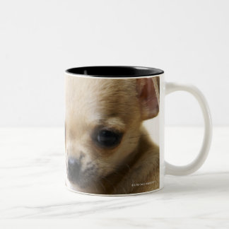 Chihuahua puppy in bowl (cropped) Two-Tone coffee mug