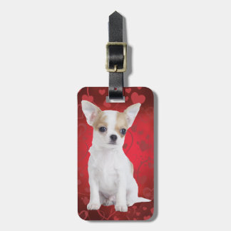 Chihuahua puppy in red luggage tags