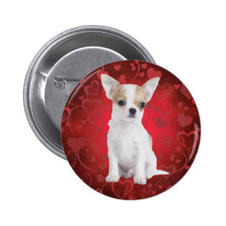 Chihuahua puppy in red pinback button