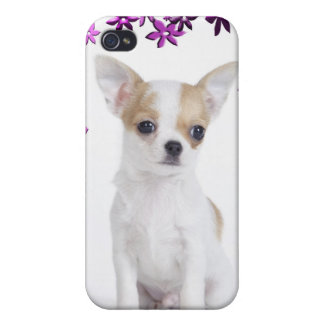Chihuahua puppy iPhone 4 case