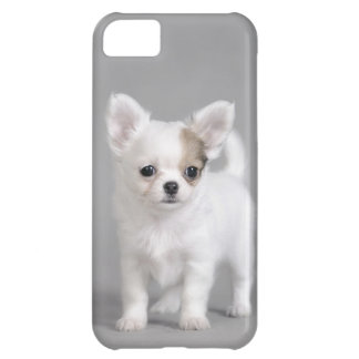 Chihuahua puppy iPhone 5C cover
