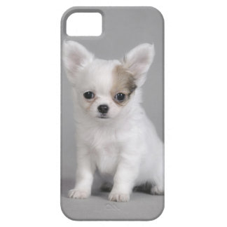 Chihuahua puppy iPhone SE/5/5s case