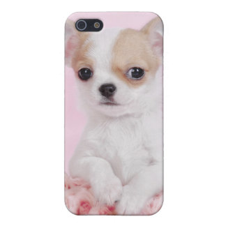 Chihuahua puppy iPhone SE/5/5s cover
