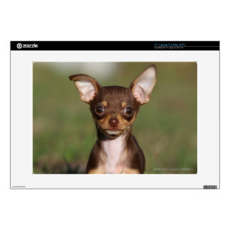 """Chihuahua Puppy Looking at Camera Skin For 15"""" Laptop"""