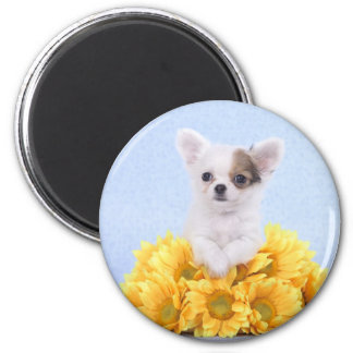 Chihuahua puppy 2 inch round magnet