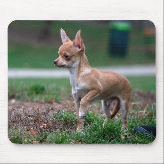 Chihuahua Puppy Mousepads