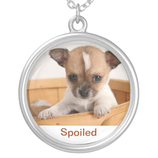 Chihuahua Puppy Necklace