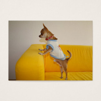 Chihuahua Puppy On Yellow Sofa Business Card