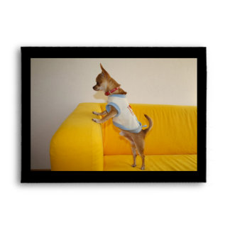 Chihuahua Puppy On Yellow Sofa Envelope