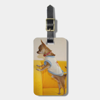 Chihuahua Puppy On Yellow Sofa Tag For Luggage