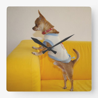 Chihuahua Puppy On Yellow Sofa Square Wall Clock