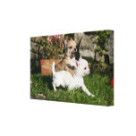 Chihuahua Puppy Playing Canvas Print