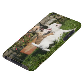 Chihuahua Puppy Playing Case-Mate iPod Touch Case
