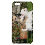 Chihuahua Puppy Playing Cover For iPhone 5C
