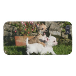 Case Savvy iPhone 5 Matte Finish Case with Chihuahua Phone Cases design