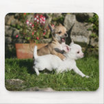 Chihuahua Puppy Playing Mouse Pad
