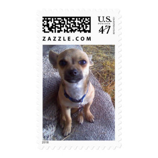Chihuahua Puppy Postage