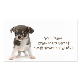 Chihuahua puppy standing of white background Double-Sided standard business cards (Pack of 100)