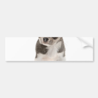 Chihuahua puppy standing of white background car bumper sticker