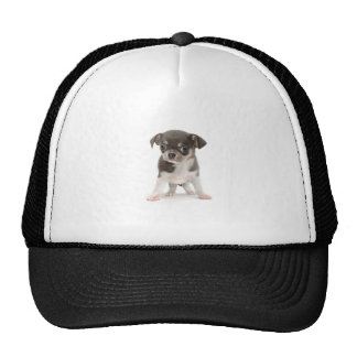 Chihuahua puppy standing of white background trucker hat