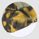 Chihuahua Puppy Stickers
