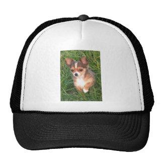 Chihuahua puppy trucker hat