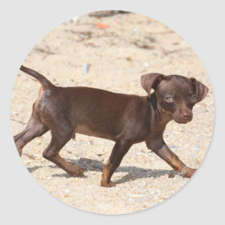 Chihuahua Puppy Walking Sticker