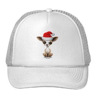 Chihuahua Puppy Wearing a Santa Hat