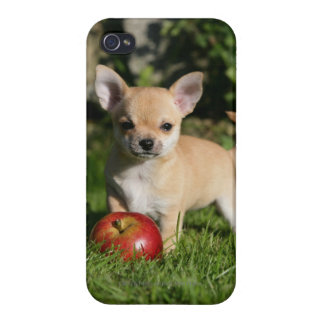 Chihuahua Puppy with Apples Cover For iPhone 4