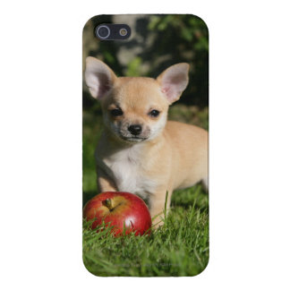 Chihuahua Puppy with Apples iPhone SE/5/5s Case