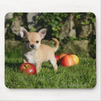 Chihuahua Puppy with Apples Mouse Pad