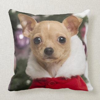 Chihuahua que lleva un juego del navidad cojín decorativo