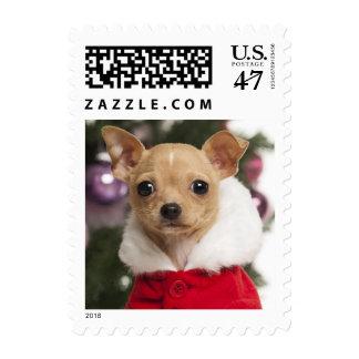 Chihuahua que lleva un juego del navidad estampilla