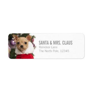 Chihuahua que lleva un juego del navidad etiqueta de remite
