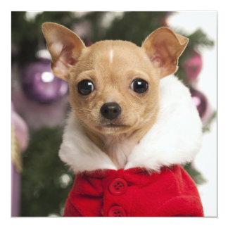 """Chihuahua que lleva un juego del navidad invitación 5.25"""" x 5.25"""""""