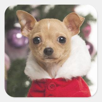 Chihuahua que lleva un juego del navidad pegatina cuadrada