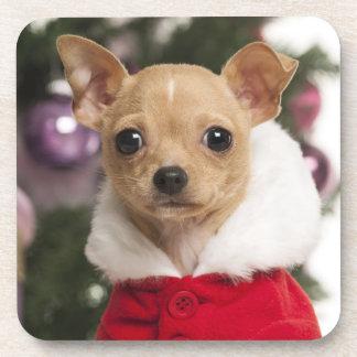Chihuahua que lleva un juego del navidad posavasos de bebidas