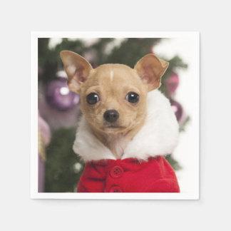 Chihuahua que lleva un juego del navidad servilleta de papel