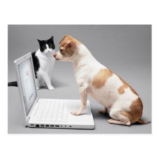 Chihuahua que mira en la pantalla de un ordenador postal