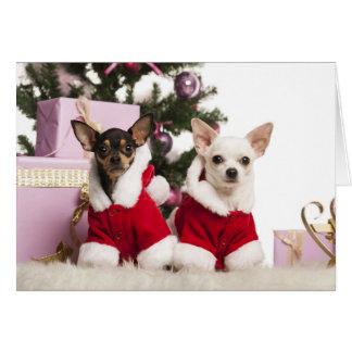 Chihuahua que sienta y que lleva un juego del tarjeta de felicitación