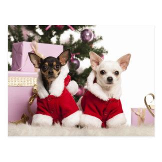 Chihuahua que sienta y que lleva un juego del tarjeta postal
