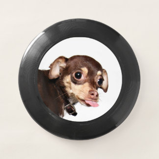 Chihuahua razzberry Wham-O frisbee