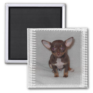Chihuahua s Rule 1 Refrigerator Magnets