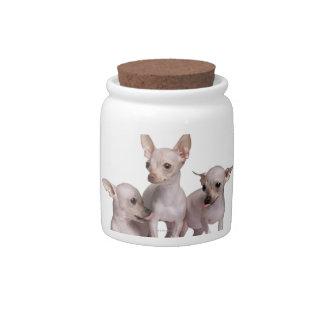 Chihuahua sin pelo (5 y 7 meses) plato para caramelo