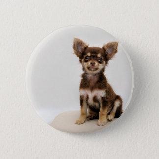 Chihuahua Small Dog Pinback Button